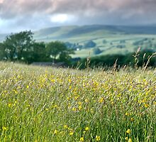 Meadows to Dales by Sue Knowles