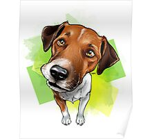jack russel Poster