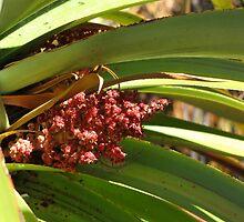 Tasmanian Pandani Flower by DianneLac