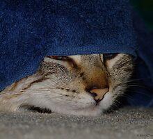 Peek-a-boo by Dave Tunstall