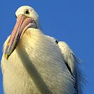 What a Long Beak You Have Mr Pelican! by Gabrielle  Lees