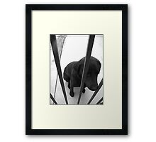 Inmate K-9 Framed Print