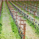 The Wine Fields by Steve Cozart