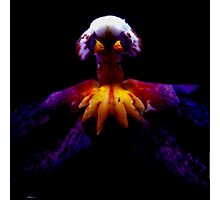 Incensed - A New Perspective on Orchid Life Photographic Print
