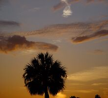 Florida Palm Sunset by TranquilArt