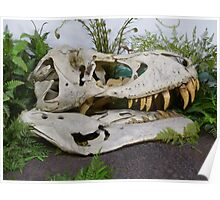 T-Rex Fossil Poster