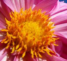 Beautiful Bloom by Matthew Sims