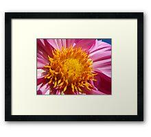 Beautiful Bloom Framed Print