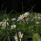 Daisys lawn by KiwigirlKara
