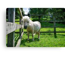 Solo The Shetland Pony Canvas Print