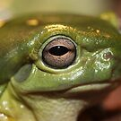 Magnificent Tree Frog by Steve Bullock