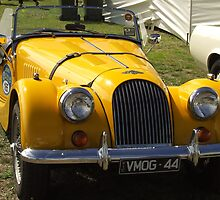 Yellow Morgan by Andrew Turley