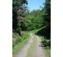 Forest road in Gdansk Photographic Print