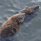 Muskrat Love by Lorelle Gromus