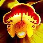 Say Ahh - A New Perspective on Orchid Life by ©Ashley Edmonds Cooke
