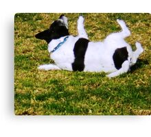Edward loved to roll at the Park Canvas Print