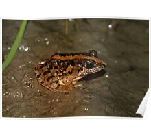 Rice Paddy Frog 2 Poster