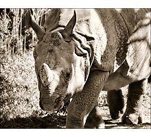 Rhino - Toronto Ontario Photographic Print