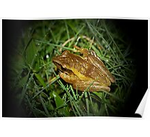 Rice Paddy Frog 3 Poster