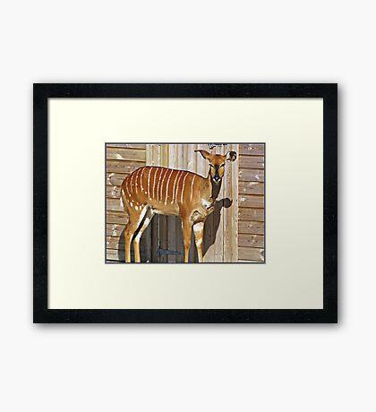 """ Wild Animals"" Framed Print"