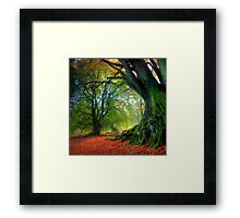 Autumn Beech Framed Print