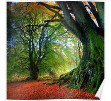 Autumn Beech Poster