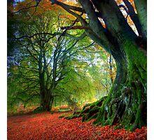 Autumn Beech Photographic Print