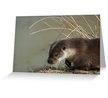Otter (lutra lutra) Greeting Card