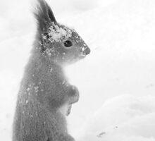 Snowy by Ritva Ikonen