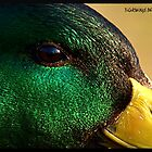 The Ducks' Eye by tigerwings