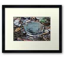 Long-necked Turtle Framed Print