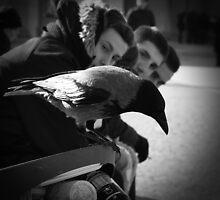Komischer Vogel by metronomad