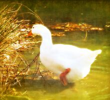 Mother Goose by Yool