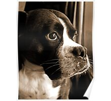 Arwen By The Window  -Boxer Dogs Series- Poster