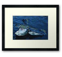 male and female alligator Framed Print
