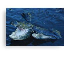 male and female alligator Canvas Print