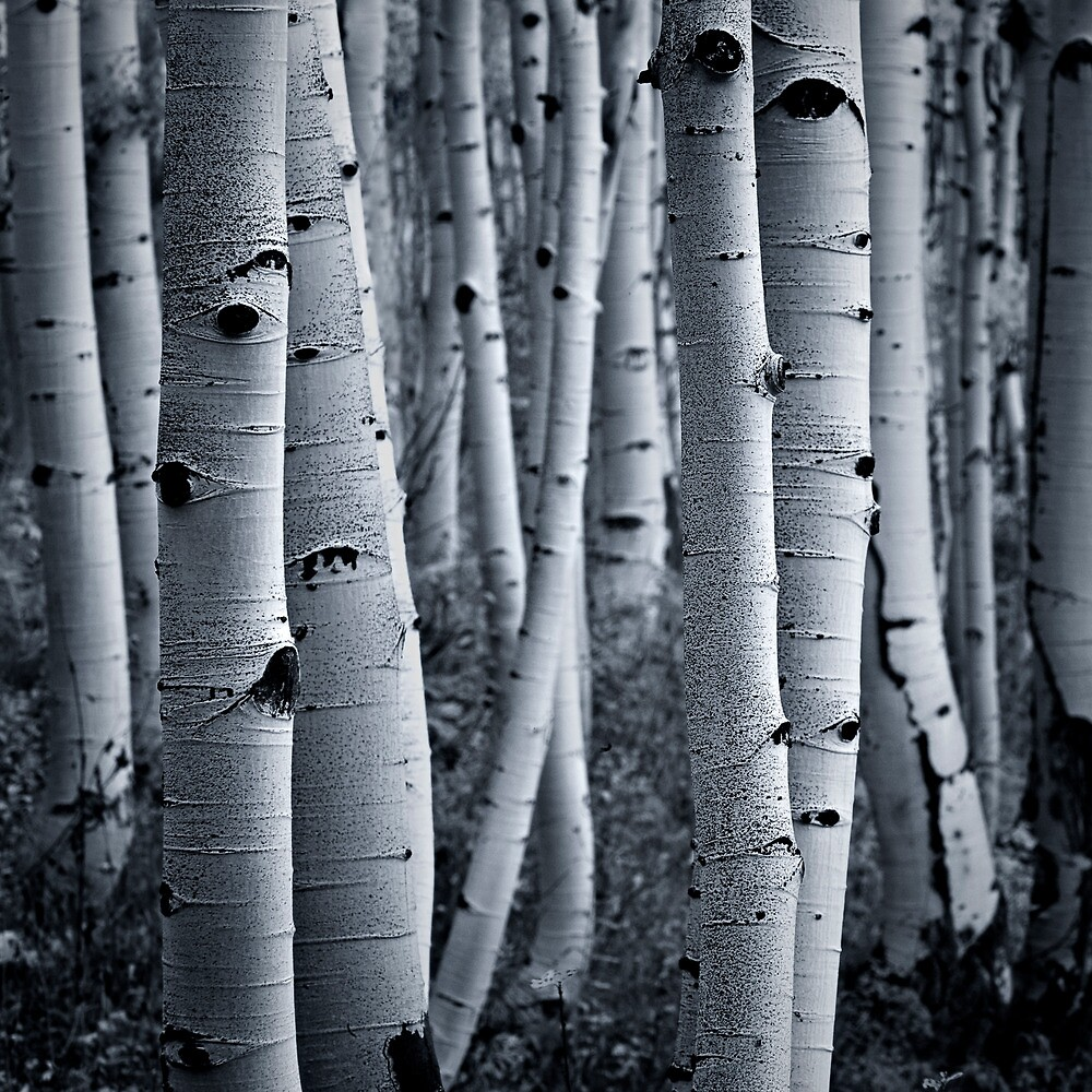 Forest eyes by Tomas Kaspar