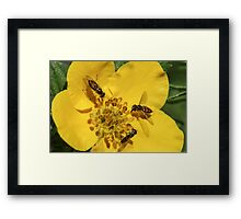 Three Colorful Flies Framed Print