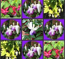 Fuchsia Belles Collage by Kathryn Jones