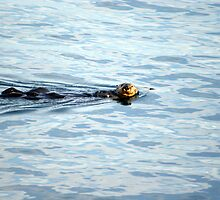 Ottering Around by KaraKeene