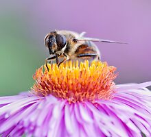 Bee on top of the world by nics-pics