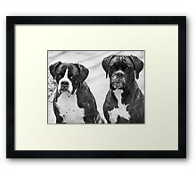 Portrait of 2 boxers -Boxer Dogs Series- Framed Print