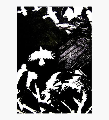 Crows (Drawn on cartridge paper) Photographic Print