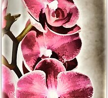 Orchids From Lynn by tvlgoddess