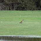 Green Woodpecker by amy4vince