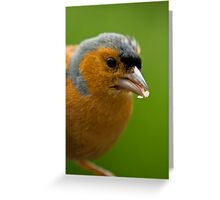 Chaffinch eating Greeting Card