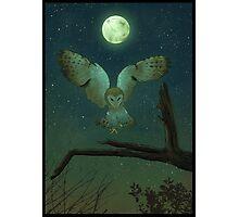 Owl Hunt Photographic Print