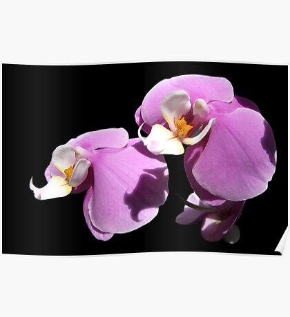 Orchid III Poster