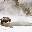 Yellowstone Winterscapes by Gary Lengyel