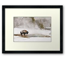 Bison Keeping Warm, Yellowstone National Park Framed Print